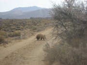 Beware Aardvark crossing