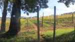 Vineyard Trail - Devon Valley - June 2014_0005