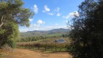 Vineyard Trail - Devon Valley - June 2014_0032