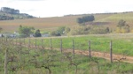 Vineyard Trail - Devon Valley - June 2014_0076