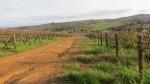 Vineyard Trail - Devon Valley - June 2014_0082
